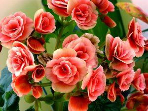 Virágcsokor születésnapra
