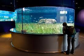Egy óriás akvárium tervezés időbe telik
