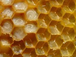 A méhpempő jó hatással van a szervezetre