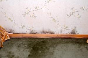 A nedves falat szárítja ki a párátlanító